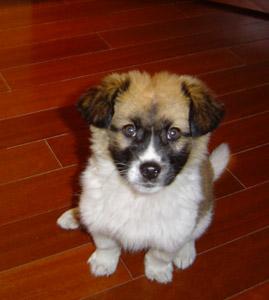 puppyx.jpg